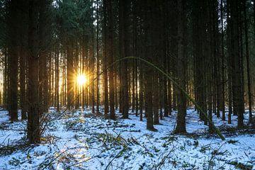 Sonnenuntergang im Winterwald (Niederlande)