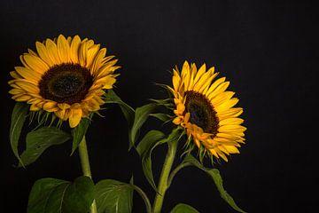 Zonnebloemen 5 von Joke Beers-Blom