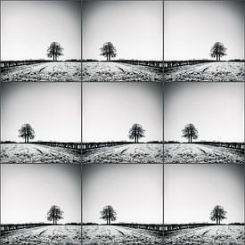 Lonelytree-collage sur Rob van der Pijll