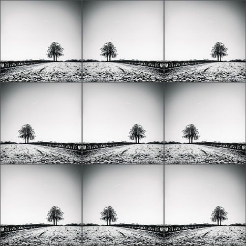 Lonelytree-collage