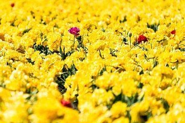 Geel met accent paars van Floris van Woudenberg