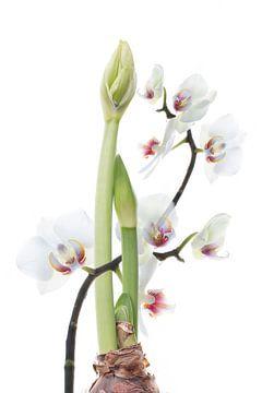 stilleven met bloemen van Klaartje Majoor