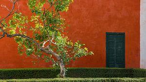 Rode muur met boom, Sevilla (Spanje)