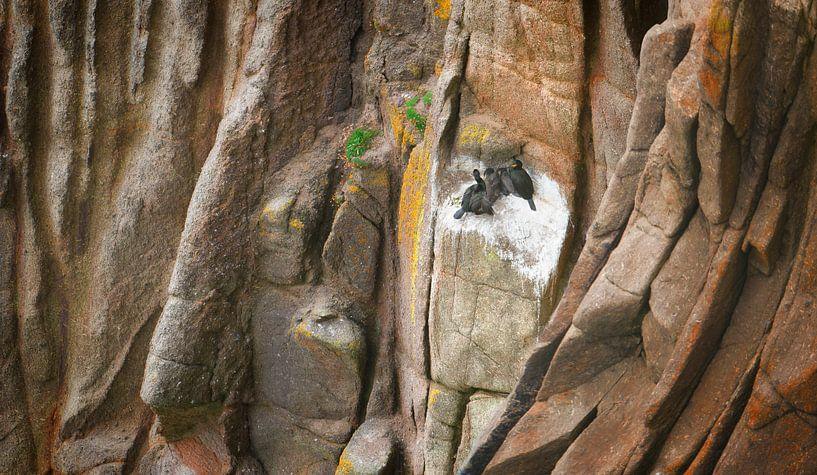 1385 Cormorants on the Rock van Adrien Hendrickx