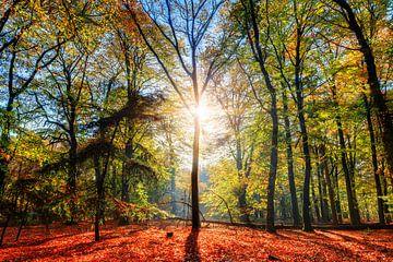 Zonsopkomst op de Grebbeberg in de herfst van Dennis van de Water