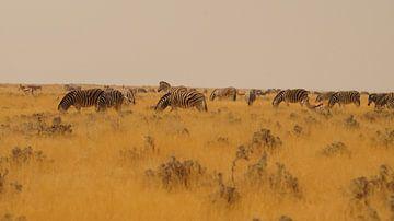 Zebra's op de steppe von Erna Haarsma-Hoogterp