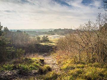 Bergense Bos/Duinen van Martijn Tilroe