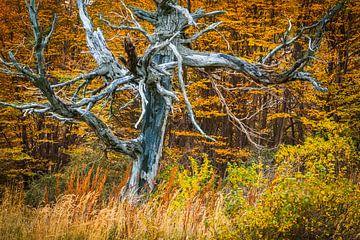Dode Lenga boom in herfstlandschap van Chris Stenger