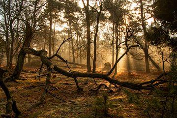 Nebliger Morgen im Wald von Mark Regelink