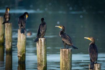 Op een rij van Koen Boelrijk Photography