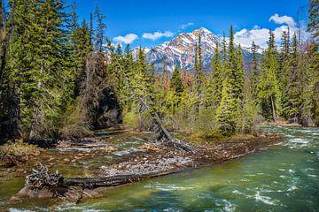 Omgevallen bomen in rivierlandschap, Canada van Rietje Bulthuis