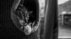 Hare kattige heerlijkheid van Tim Briers