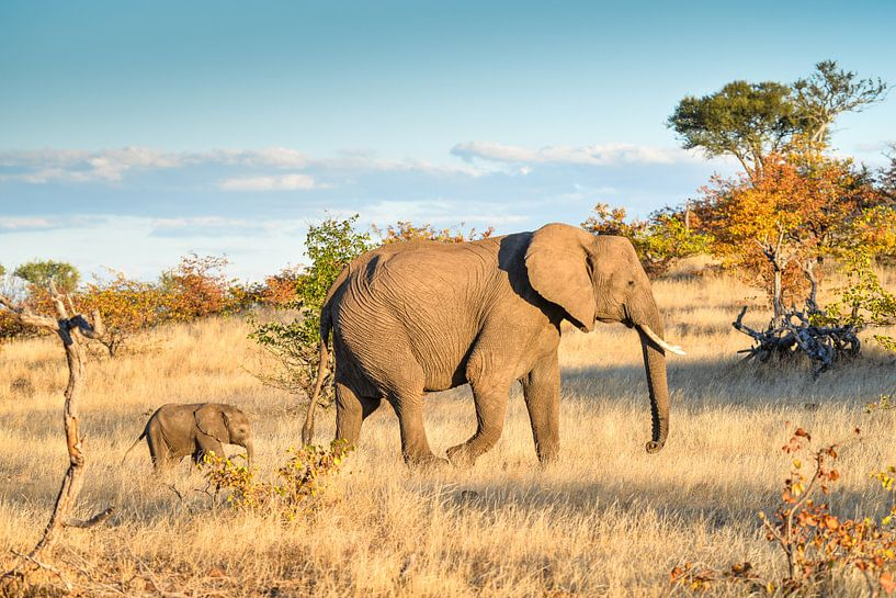 Olifant met jonge olifant van Robert Styppa