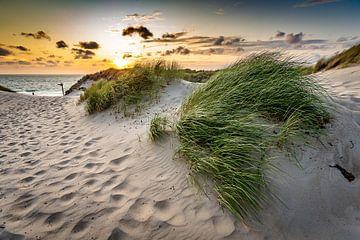 Abendlicht über den Dünen von Koen Mol