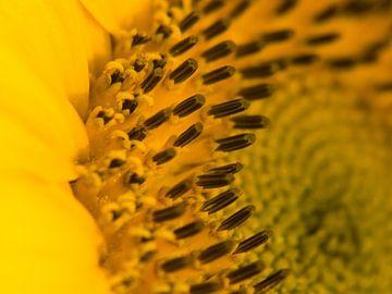Details van zonnebloem van Martijn Wit