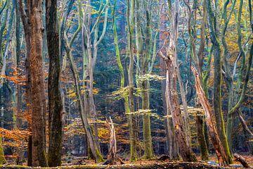 Farben des Waldes von Lars van de Goor