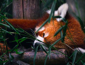 Dornröschen im Schlaf 2 von Daan Uijterwaal