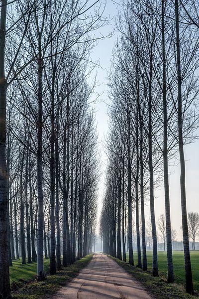 Laantje met hoge bomen in de winterzon nabij Lieshout, Brabant van Hein Fleuren