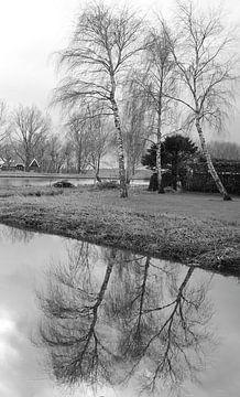 Birke im Wasser von V. Hildering