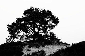De boom op weg van Joyce Pals