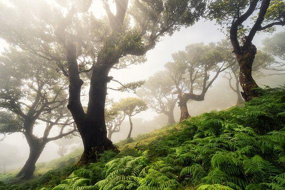 forest on Madeira van Martin Podt