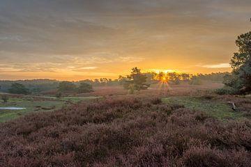 Sonnenaufgang in der Brunssummerheide von John van de Gazelle