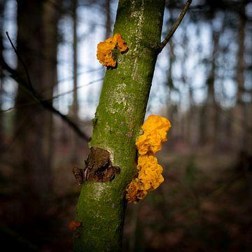 Orange vibrierenden Pilz auf einem grünen geschlagenen Baum von Noud de Greef