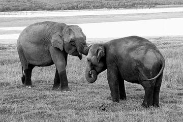 Vriendschap of liefde? van Inge Hogenbijl
