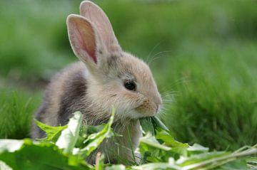 Jong konijn in groen gras van Anja Uhlemeyer-Wrona