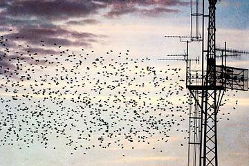 Vogelzug am Strommast von Heike Hultsch