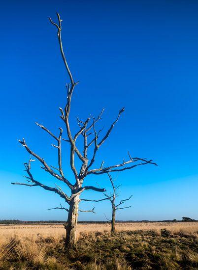 Groote Heide 6