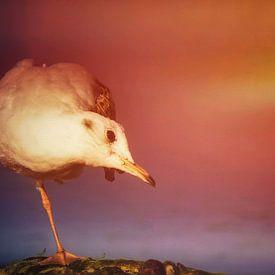 Möwe bei Sonnenuntergang von Max Steinwald