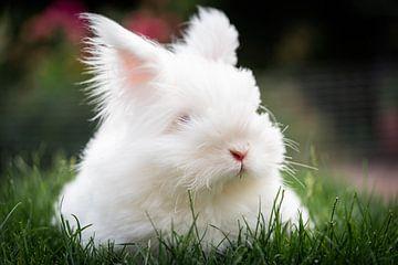 Kaninchen im Streichelzoo von Jeroen Mikkers
