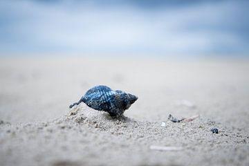 schelp op schiermonnikoog van Karijn | Fine art Natuur en Reis Fotografie