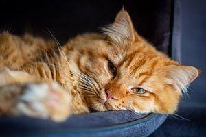 faule Hauskatze auf seinem Stuhl von Heleen Pennings