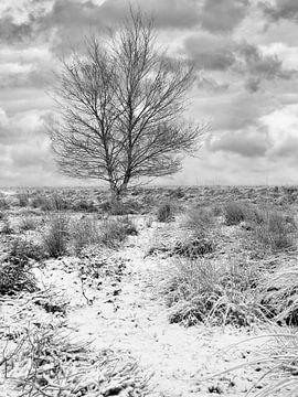 Winterlandschap met eenzame boom in de sneeuw bedekte heide 1 van Tony Vingerhoets