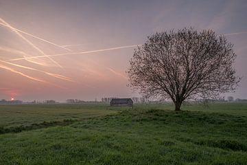 Weiland met boom en schuur bij zonsopkomst 04 von Moetwil en van Dijk - Fotografie