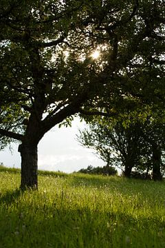 Zonnige boomgaard von Matthijs Damen