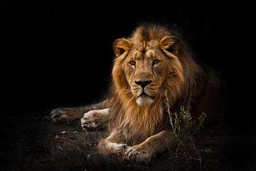 La bête est un puissant lion mâle avec crinière. sur Michael Semenov