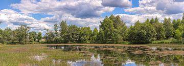 Nationalpark Hoge Veluwe Niederlande von Eric Wander