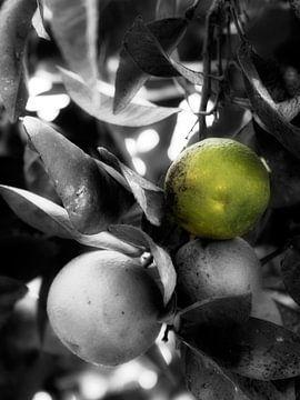 Orangen im Baum schwarz und weißgrün von Esther van Dijk