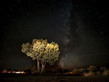 Galaxie mit Baum im Vordergrund von Rutger van Loo