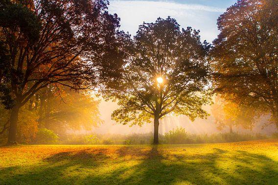 Een mooie herfstdag van Catching Colors