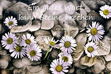 Ein gutes Wort kann Steine brechen von Christine Nöhmeier