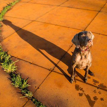 Roest en schaduw van Mogi Hondenfotografie