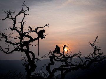 Indien - Pushkar - Zwei Affen in einem Baum von Rik Pijnenburg