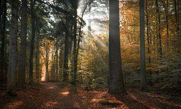 La symphonie de la forêt sur Joris Pannemans - Loris Photography