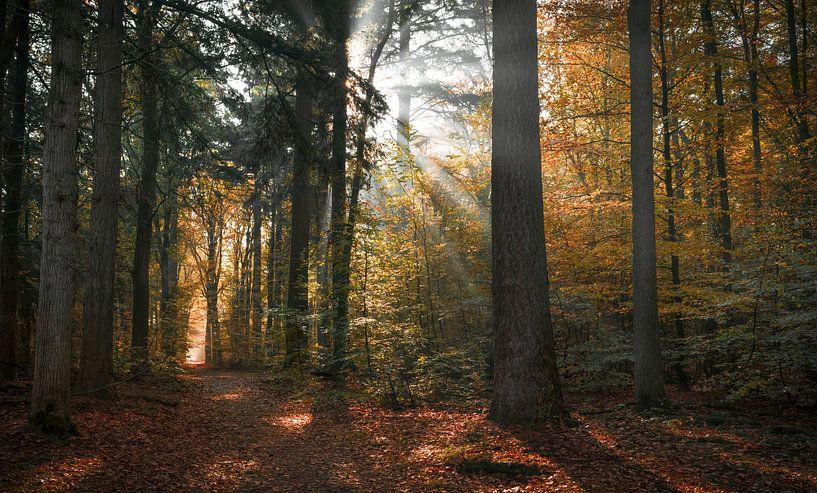 De symphonie van het woud van Joris Pannemans - Loris Photography