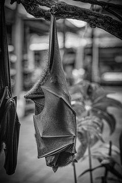 Hangende vleermuis met gesloten vleugels in zwarte en witte kleuren van pixxelmixx