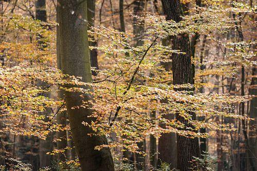 Bos met herfstbladeren aan de takken